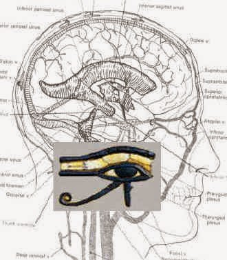 eye-of-horus-brain.jpg