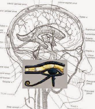 eye-of-horus-brain.jpg