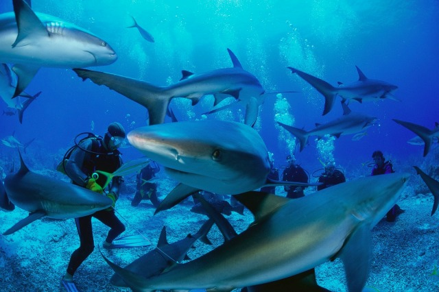 Top-5-Shark-Diving-Spots-in-The-World.jpg